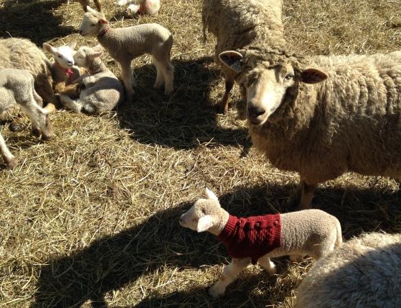 Lambs-4.jpg